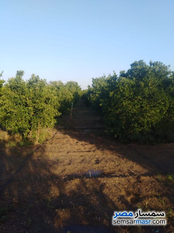 Photo 11 - Farm 10 acre For Sale Badr Buhayrah
