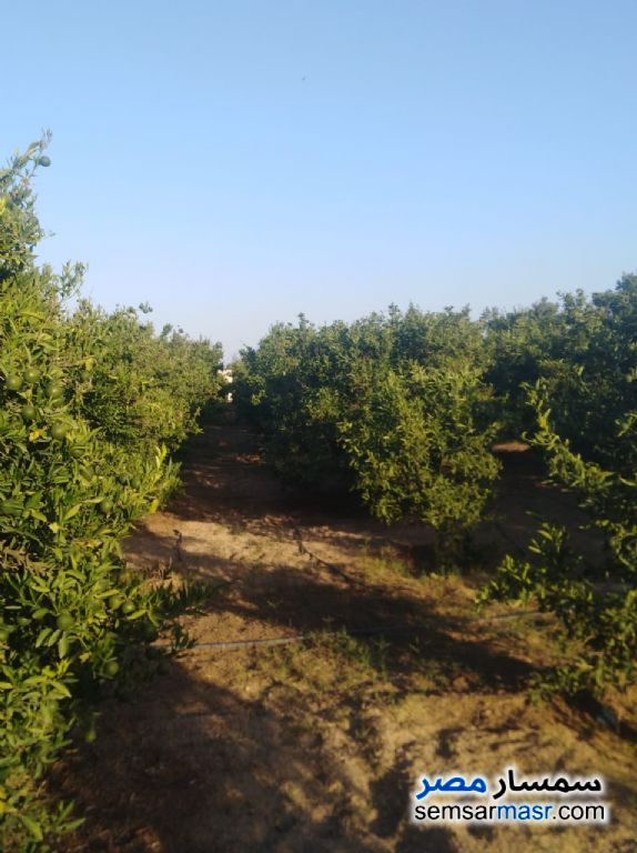 Photo 3 - Farm 10 acre For Sale Badr Buhayrah
