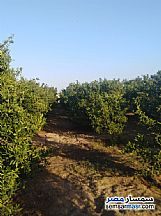 Farm 10 acre For Sale Badr Buhayrah - 3