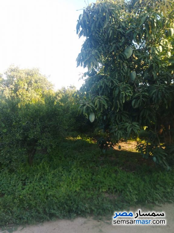 Photo 7 - Farm 10 acre For Sale Badr Buhayrah