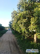 Farm 10 acre For Sale Badr Buhayrah - 9