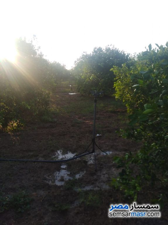 Photo 4 - Farm 10 acre For Sale Badr Buhayrah