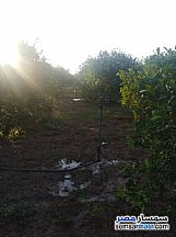 Farm 10 acre For Sale Badr Buhayrah - 4