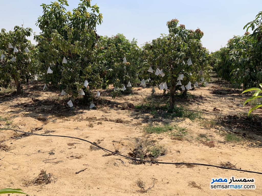 Ad Photo: Farm 15 acre in Ismailia City  Ismailia