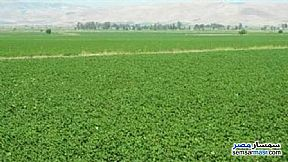 Farm 17 acre For Sale Borg Al Arab Alexandira - 2