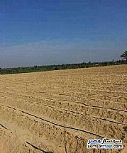 Ad Photo: Farm 3 acre in Shandoura  Suez
