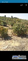 Ad Photo: Farm 42 acre in Cairo Alexadrea Desert Road  Alexandira