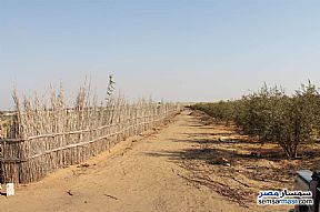 Ad Photo: Farm 22 acre in El Alamein  Matrouh