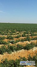 Ad Photo: Farm 80 acre in Fayoum City  Fayyum