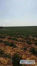 Ad Photo: Farm 50 acre in Fayoum City  Fayyum