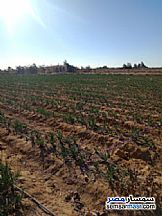 Ad Photo: Farm 65 acre in Fayoum City  Fayyum
