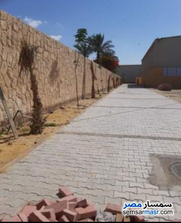 Photo 4 - Land 5,000 sqm For Rent Ajman Industrial Area 6th of October