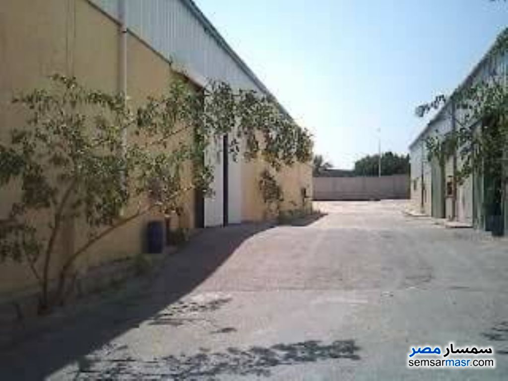 Photo 4 - Commercial 5,000 sqm For Sale Borg Al Arab Alexandira