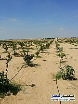 Ad Photo: Farm 70 acre in Fayoum City  Fayyum