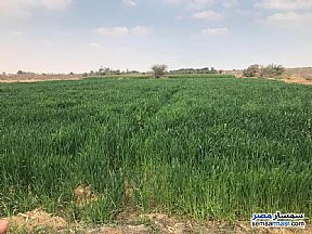 Ad Photo: Farm 100 acre in Abu El Matami  Buhayrah