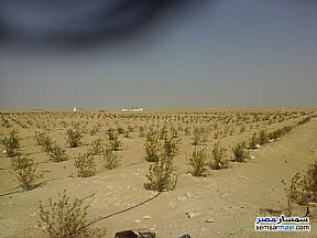 Ad Photo: Farm 35 acre in Fayoum City  Fayyum