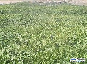 Ad Photo: Farm 10 acre in Qantara Sharq  Ismailia