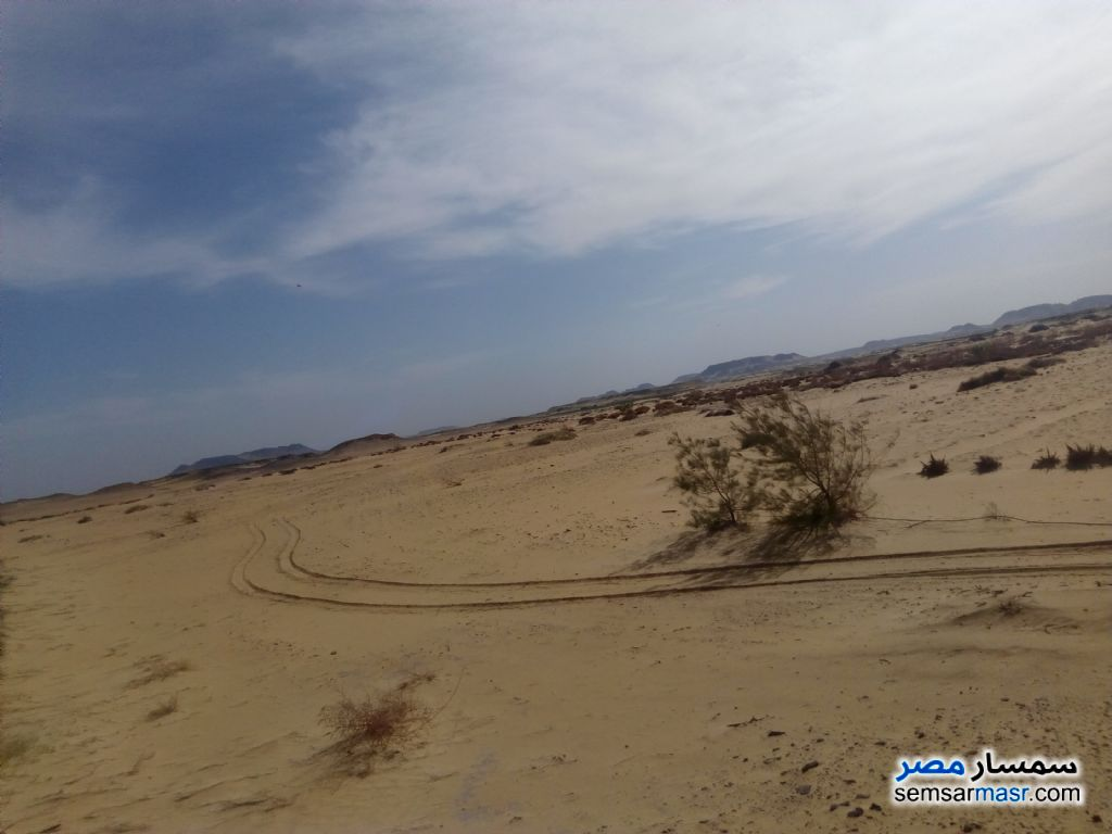 Photo 1 - Farm 100 acre For Sale Bahariya Oasis Giza