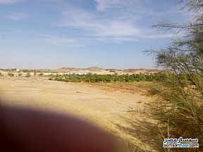 Farm 100 acre For Sale Bahariya Oasis Giza - 2