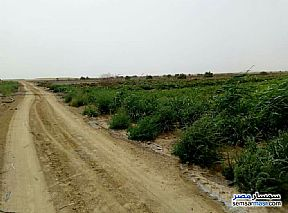 Ad Photo: Farm 50 acre in Tamiya  Fayyum