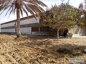Ad Photo: Farm 12 acre in Borg Al Arab  Alexandira
