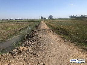 Ad Photo: Farm 12 acre in Buhayrah