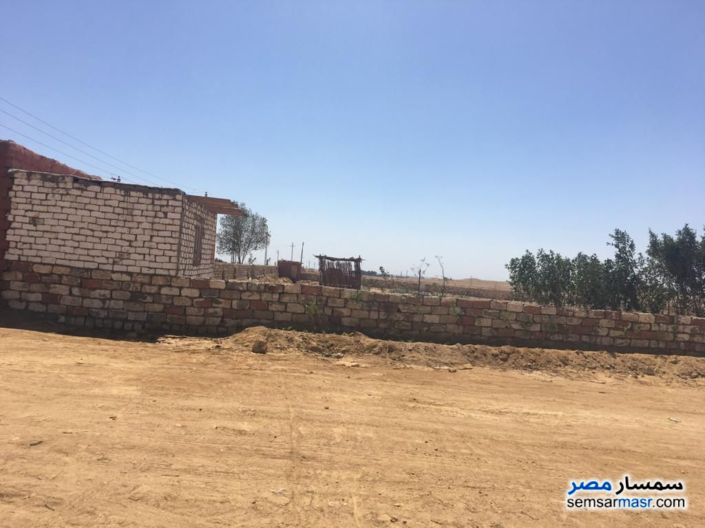 Ad Photo: Farm 45 acre in Fayyum