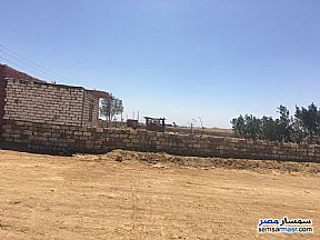 Ad Photo: Farm 45 acre in Tamiya  Fayyum