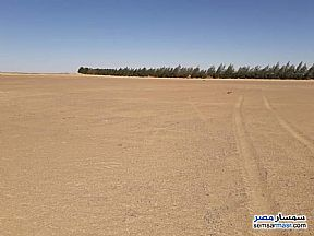 Ad Photo: Farm 150 acre in Bahariya Oasis  Giza