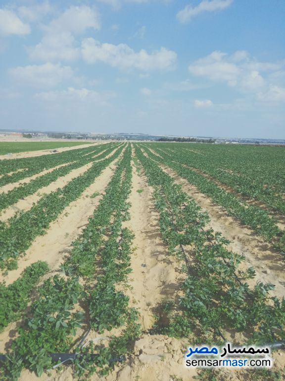 Ad Photo: Farm 20 acre in Wadi Al Natrun  Buhayrah