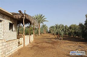 Ad Photo: Farm 20 acre in Shandoura  Suez