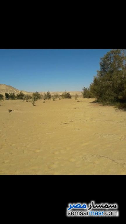 Photo 1 - Farm 2,000 acre For Sale Bahariya Oasis Giza