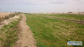 Ad Photo: Farm 25 acre in South Sinai