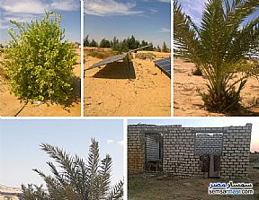 Ad Photo: Farm 27 acre in Bahariya Oasis  Giza