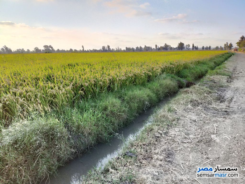 Ad Photo: Farm 3 acre in Sidi Salem  Kafr El Sheikh