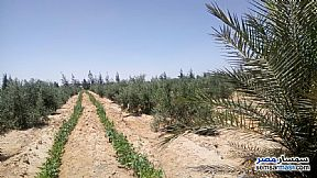 Ad Photo: Farm 3 acre in Wadi Al Natrun  Buhayrah