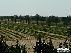 Ad Photo: Farm 30 acre in Wadi Al Natrun  Buhayrah