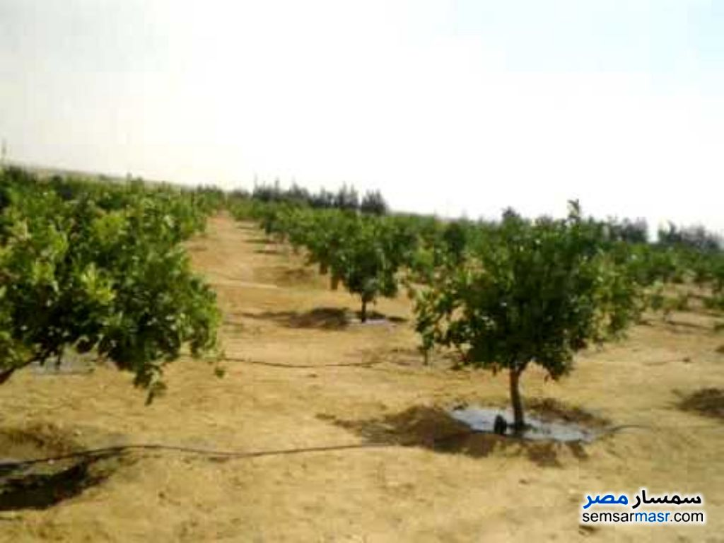 Photo 1 - Land 30 acre For Sale Districts 6th of October