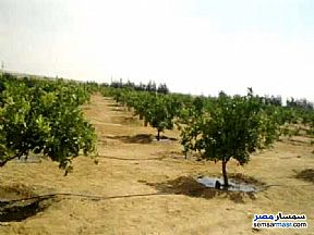Ad Photo: Land 30 acre in 6th of October