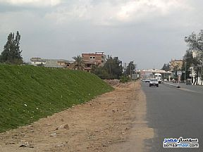 Ad Photo: Farm 34 kirat in Ashmoun  Minufiyah