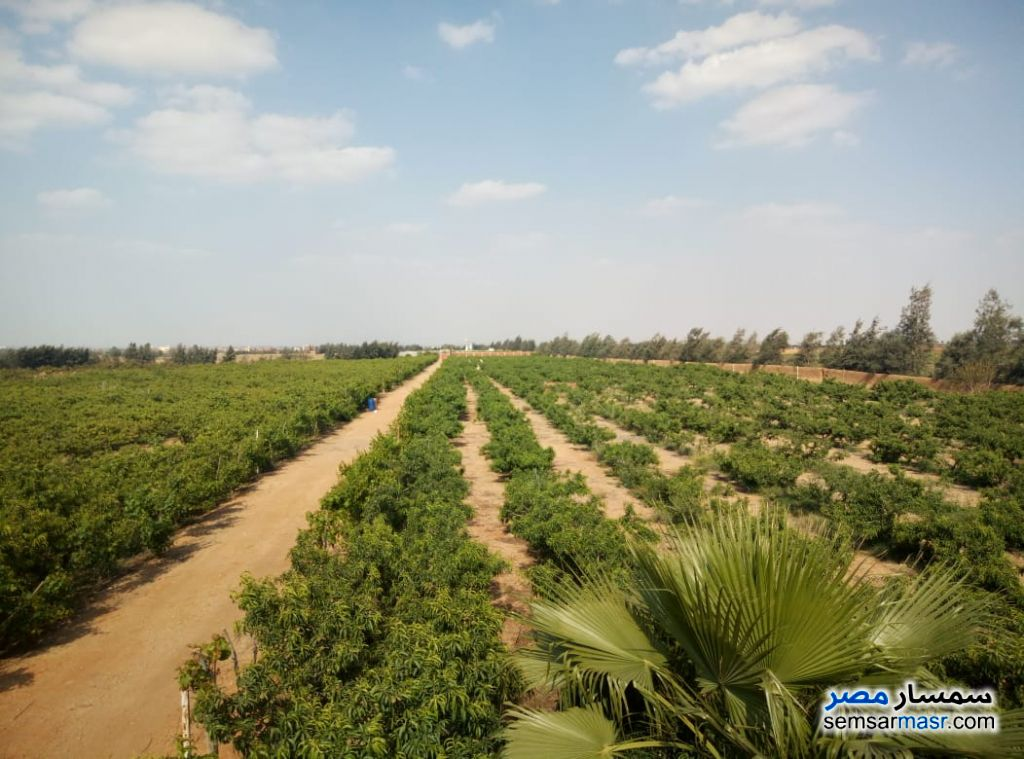 Photo 3 - Farm 46,200 sqm For Sale Bilbeis Sharqia