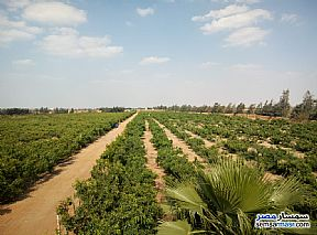 Farm 46,200 sqm For Sale Bilbeis Sharqia - 3