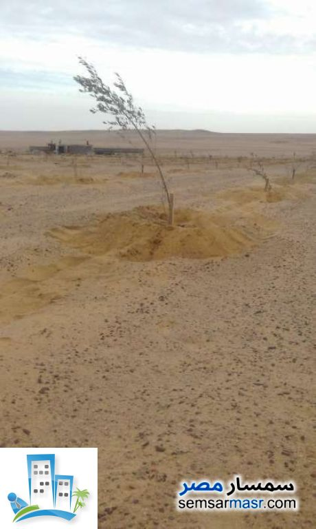 Ad Photo: Farm 50 acre in El Alamein  Matrouh