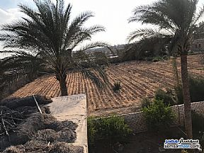 Ad Photo: Farm 50 acre in Cairo Alexandria Desert Road  Giza