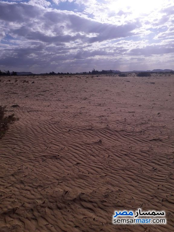 Photo 2 - Farm 74 acre For Sale Bahariya Oasis Giza