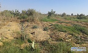 Ad Photo: Farm 77 acre in Minya City  Minya