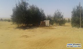 Ad Photo: Farm 95 acre in El Alamein  Matrouh
