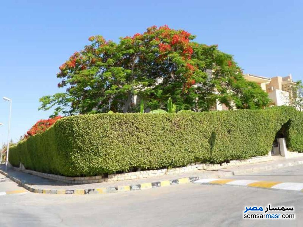 Photo 10 - Marina Villa North Coast Egypt For Rent El Alamein Matrouh