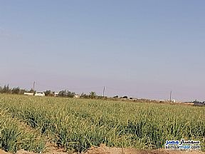 Ad Photo: Farm 20 acre in Tamiya  Fayyum
