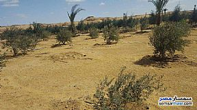 Ad Photo: Farm 100 acre in Tamiya  Fayyum